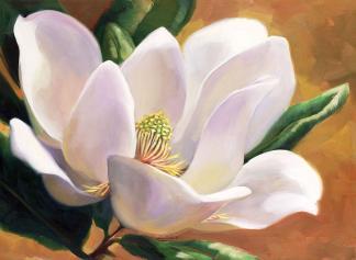 Magnolia_1024x1024